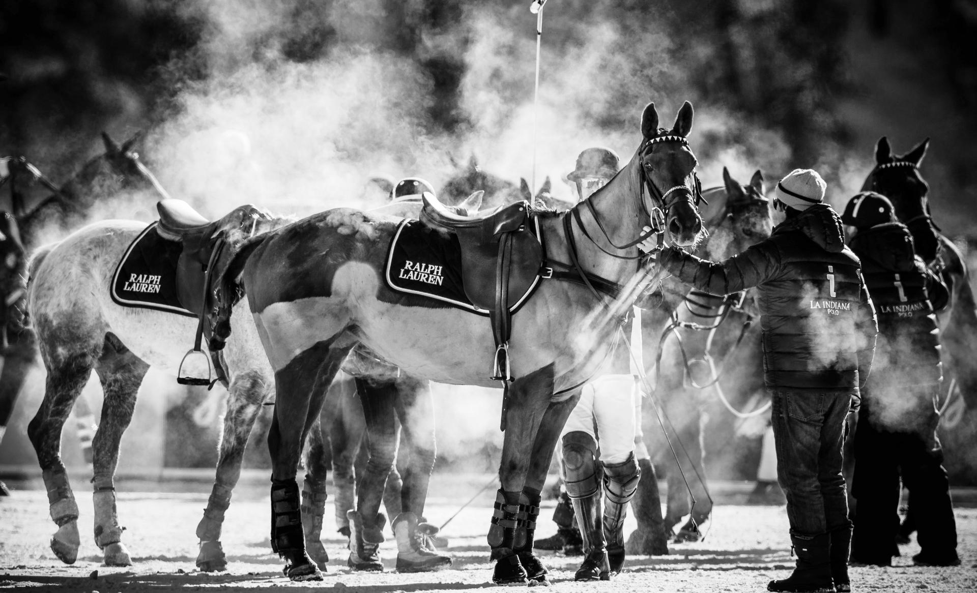Zwischen Spieler und Pferd